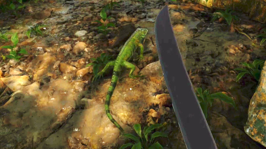 Iguanas are easy to hunt and they are a good meat source